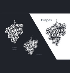 hand drawn grapes engraved sketch design vector image