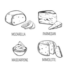 Mozzarella cheese and parmesan mimolette sketches vector