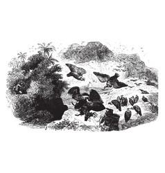 Vultures vintage vector