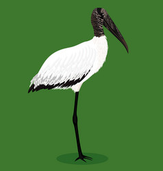 Wood stork cartoon bird vector