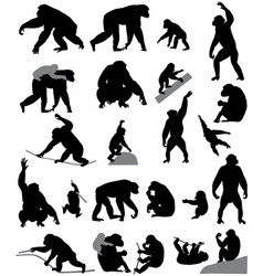 silhouettes of chimpanzees and cubs vector image vector image