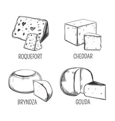 bryndza and roquefort cheddar and gouda cheese vector image vector image