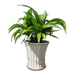 green plant in white pot vector image