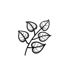 Linden leaves on branch hand drawn sketch icon vector