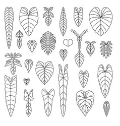 philodendron species leaf line icons set vector image