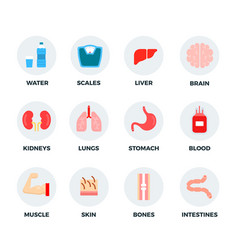 set water weights and human body parts vector image