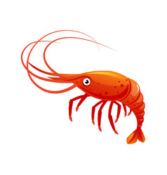 Shrimp sea creature and seafood colorful cartoon vector