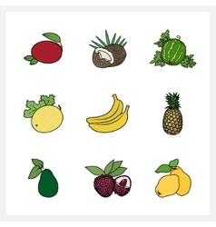 Tropical Exotic Fruit vector image
