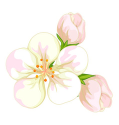 white flowers on white background vector image