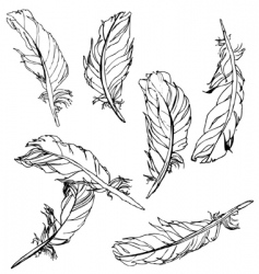 artistic feathers vector image