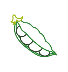 fresh peas vegetable vector image