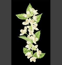 vertical design element with jasmine flowers vector image