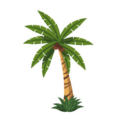 palm tree tropical natural leaves image vector image