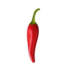 Red Pepper Isolated on White Background vector image