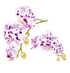 Branches orchids dots purple and white flowers vector