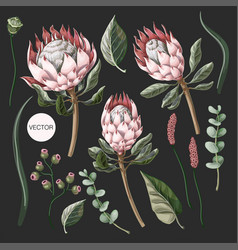 Set protea flowers eucalyptus and leaves vector