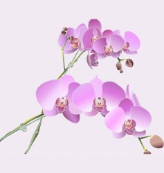 Singapore orchids vector image