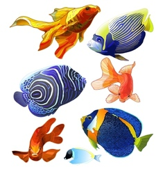 Set of exotic colorful fish vector