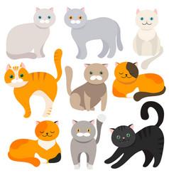 cat set of flat cartoon icons vector image