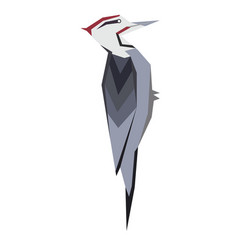Woodpecker flat vector