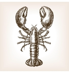 Lobster hand drawn sketch style vector image
