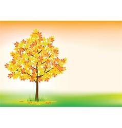 Autumn maple vector