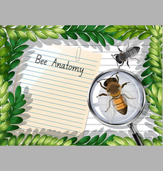 Blank paper top view with leaves and bee elements vector