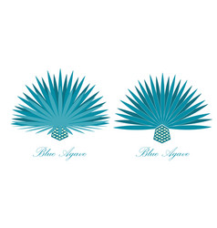 Blue agave or or tequila agave plant set vector