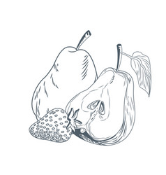 pears and strawberry hand draw vector image