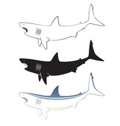 White shark vector