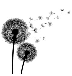 nature background with dandelion silhouette vector image vector image