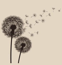 nature background with flower dandelion vector image vector image