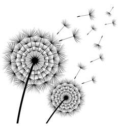 two beautiful black flower dandelion vector image vector image