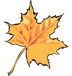 maple leaf icon canada vector image