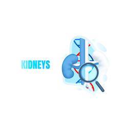 medical banner kidneys magnifying glass biology vector image