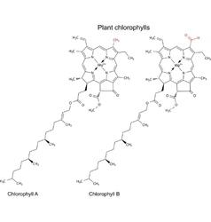 Plant pigments chlorophylls vector image