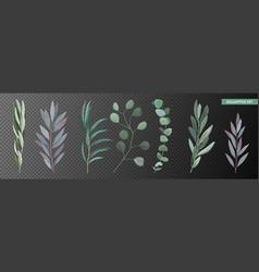 realistic eucalyptus set vector image