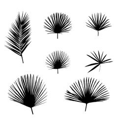 Black Palm Leaf on White Background vector