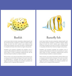 Boxfish and butterfly fish isolated on white icons vector