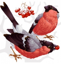 Bullfinch and ash berry vector