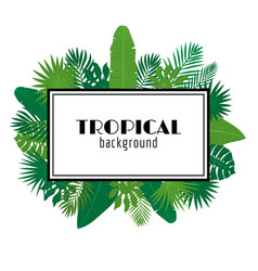Tropical leaves background summer design square vector