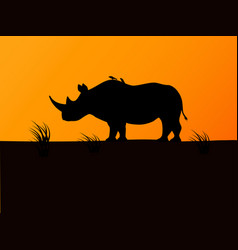 black rhino silhouette background sunset vector image vector image