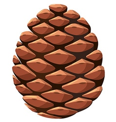 Close up of pine cone vector