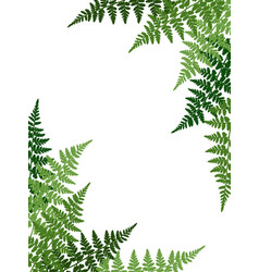 fern frond tropical leaves frame vector image