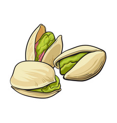 group of pistachio nuts shelled and unshelled vector image