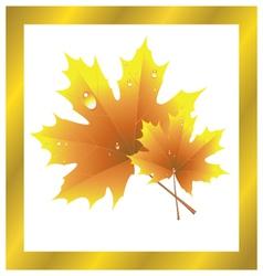 Maple Leaf Golden Autumn vector