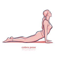 yoga cobra pose bhujangasana asana vector image