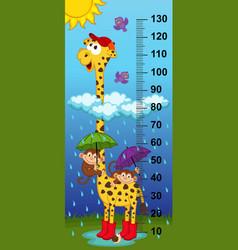 giraffe height measure vector image