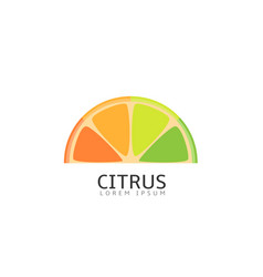 pieces of citrus fruits vector image