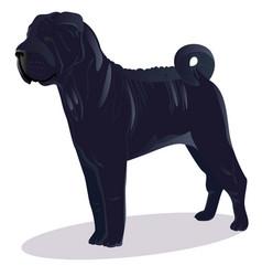 chinese shar pei blue dog vector image